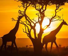 Minexpo Africa 2018